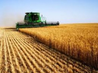 Central-European cereals (except rice)  leguminous crops  oil seeds producer open for sale